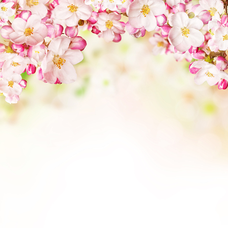 Cherry blossoms over blurred nature background, copyspace for text Stock Photo - 53031407