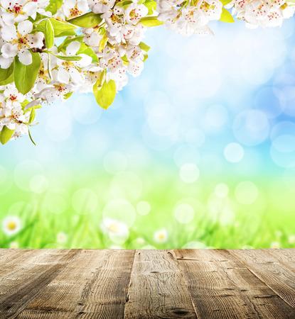 Fiori di ciliegio su sfondo sfocato natura e assi di legno vuote. Copyspace per il testo