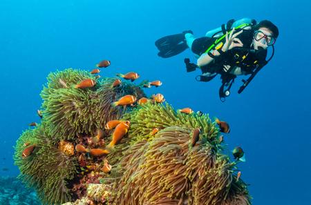 아름 다운 산호초를 탐험하는 여성 스쿠버 다이 버 확인 기호를 표시합니다. 인도양의 수중 촬영, 몰디브