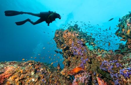 underwater ocean: Scuba diver explore beautiful coral reef. Underwater photography in Indian ocean, Maldives