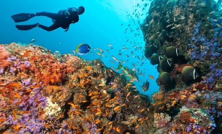 스쿠버 다이버는 아름다운 산호초를 탐험합니다. 인도양의 수중 촬영, 몰디브