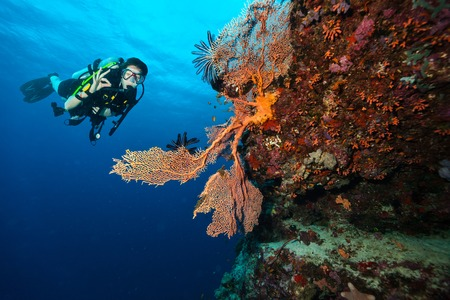 divers: Female scuba diver showing ok sign, explore beautiful coral reef. Underwater photography in Indian ocean, Maldives Stock Photo