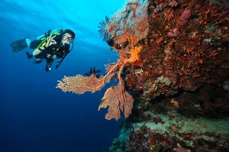 Vrouwelijke scuba-duiker die ok teken, verken de prachtige koraalriffen. Onderwater fotografie in de Indische Oceaan, de Maldiven