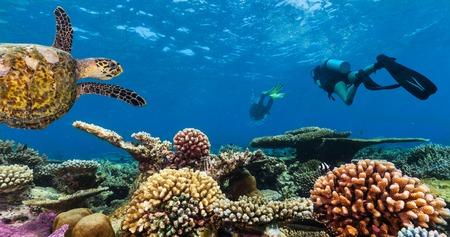 ecosistema: Los buzos con tortuga explorar hermoso arrecife de coral. la fotografía submarina en el Océano Índico, Maldivas