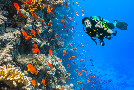 Female scuba diver showing ok sign, explore beautiful coral reef. Underwater photography in Red Sea, Egypt Stockfoto