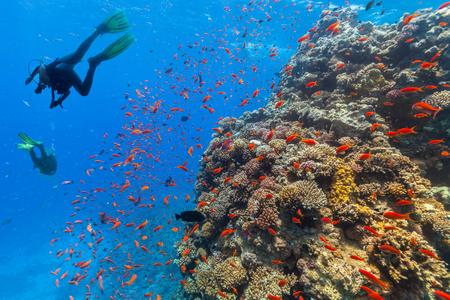 スキューバ ダイビングは、美しいサンゴ礁を探索します。紅海、エジプトで水中写真 写真素材