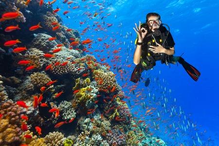 아름 다운 산호초를 탐험하는 여성 스쿠버 다이 버 확인 기호를 표시합니다. 홍해, 이집트의 수중 사진
