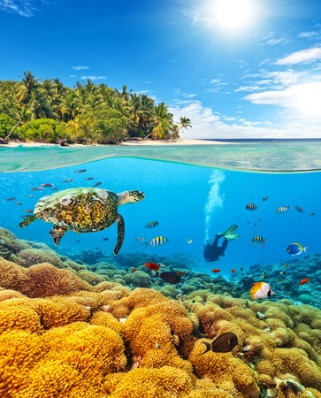 Underwater view of coral reef and scuba diver and turtle with horizon and water surface split by waterline. Beautiful nonsettled tropical island on background. Summer holiday concept. High Resolution