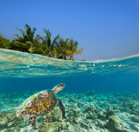Underwater coral reef seabed and water surface with tropical island Stok Fotoğraf