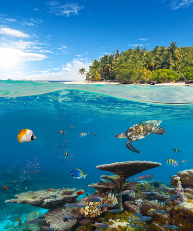 desert island: Underwater coral reef seabed and water surface with tropical island Stock Photo