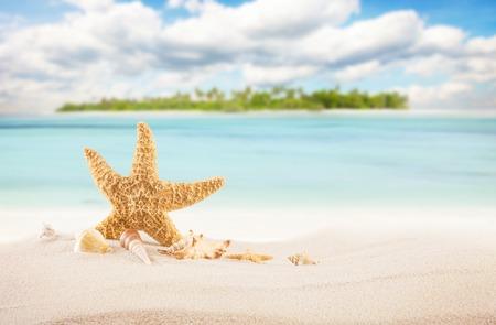 Sandy tropical beach with palm island and starfish