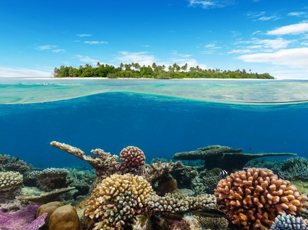 Underwater coral reef seabed and water surface with tropical island Standard-Bild