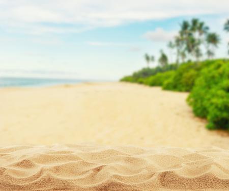 야자수가있는 여름 모래 사장, 제품 배치를위한 여유 공간