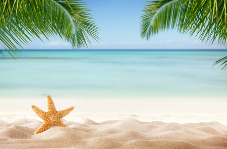 Tropical beach with sea-star in sand, copyspace for text. Concept of summr relaxation