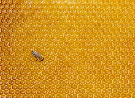 꿀 셀, 텍스트 copyspace에 작업 꿀벌의 뷰를 닫습니다 스톡 콘텐츠