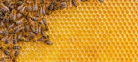 Close-up van de werkende bijen op honing cellen, copyspace voor tekst Stockfoto
