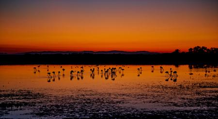 lake sunset: Beautiful sunset panorama with flamingos silhouettes, national park Camargue, Provence, France
