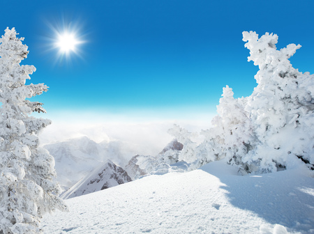 Beautiful winter landscape with spruce trees. Blue sky with sun light and high Alpine mountains on background