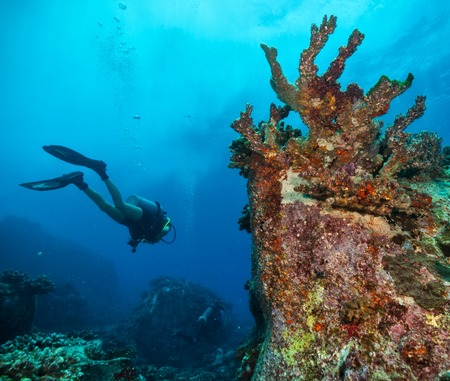 scuba woman: Young woman scuba diver exploring sea bottom. Underwater life with beautiful rocks and coral