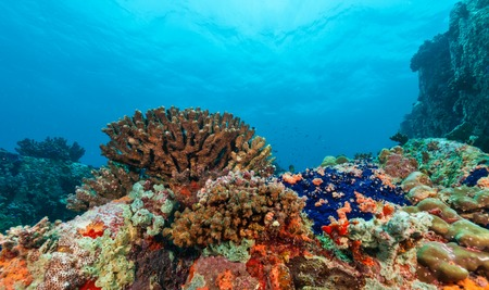 reef: Beautiful underwater colored coral reef garden background Stock Photo