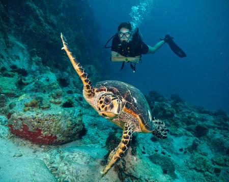 산호초에 흐르는 Hawksbill 거북이와 스쿠버 다이버
