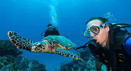 Scuba divers with Hawksbill turtle flowing in coral reef Stock Photo