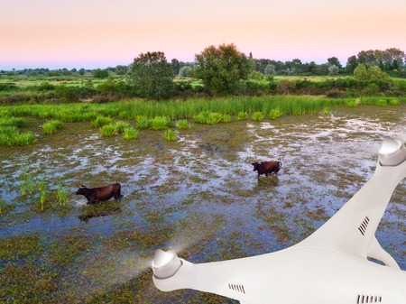 Close-up of drone flying above swamps with water bulls Stock Photo