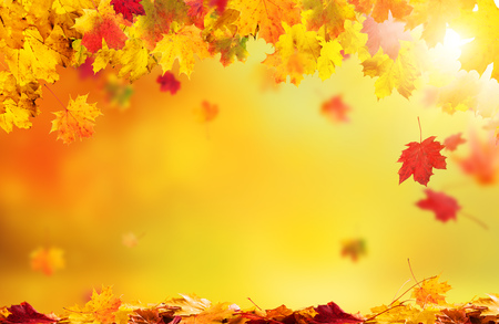 Autumn abstract background with falling leaves and copyspace for text Stock Photo