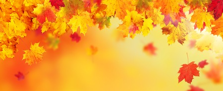 Autumn abstract background with falling maple leaves and copyspace for text Stock Photo