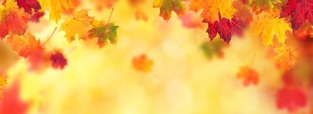 抽象的な背景と立ち下がりのメープルの葉秋と本文 copyspace 写真素材