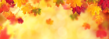Autumn abstract background with falling maple leaves and copyspace for text 版權商用圖片