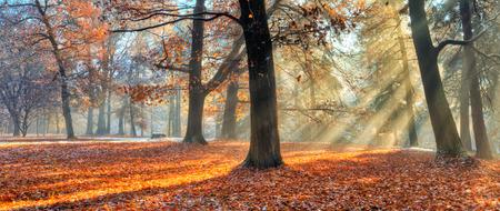 Schöne Morgen Sonnenstrahlen im Spätherbst Wald, Bäume mit Schnee auf Hintergrund bedeckt