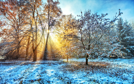 Beatiful morning sunrays in winter forest with amazing sun beams in fog