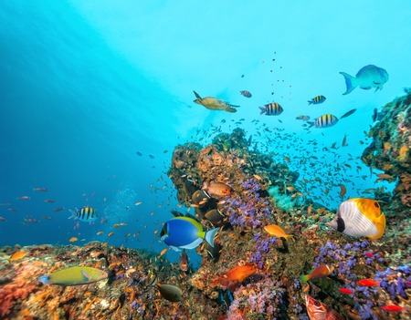 Beautiful coral reef with colored fish around, underwater life. Copyspace for text Stock Photo