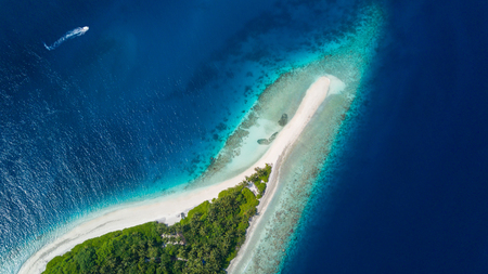 green water: Beautiful aerial view of Maldives tropical beach with palms and white sand. Travel and vacation concept Stock Photo