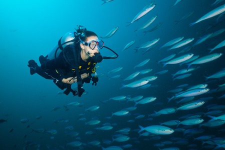 deepness: Woman scuba diver exploring sea deepness. Underwater life with beautiful fish. Indian ocean, Maldives