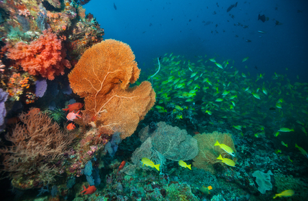 Beautiful soft coral reef in Indian ocean, Maldives. Underwater life and ecosystem