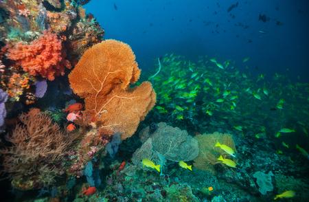 Mooie zachte koraalrif in de Indische Oceaan, Malediven. Onderwaterleven en ecosysteemdiensten