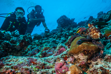 goatfish: Two scuba divers exploring coral reef with octopus, Maldives atolls, Indian Ocean. Stock Photo