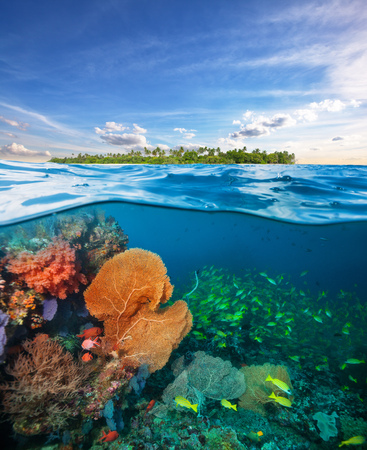 Beautiful colored soft coral garden. Tropical island above. Underwater sealife