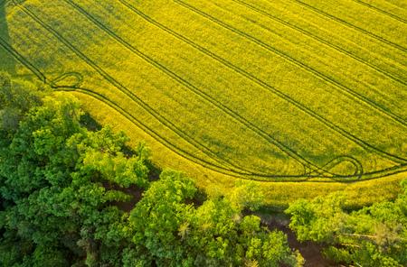森と満開の菜の花畑の空撮は、熱気球から撮影。美しい自然と環境の背景 写真素材