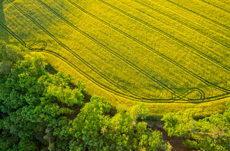 뜨거운 공기 풍선에서 총 숲과 피 강간 필드의 공중보기. 아름다운 자연과 환경 배경 스톡 콘텐츠