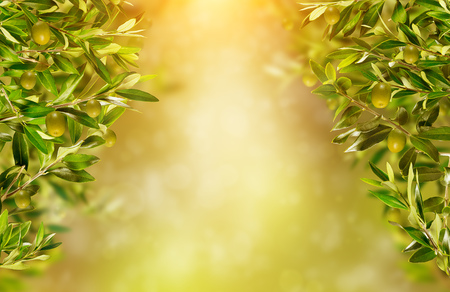 Olive branches background, ready for product placement. Copyspace, high resolution image Archivio Fotografico