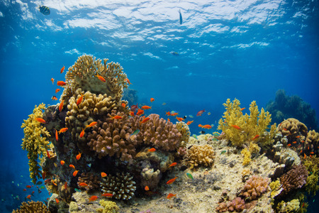 Beautiful coral reef with sealife. Underwater landscape photo with fish and marine life Stockfoto