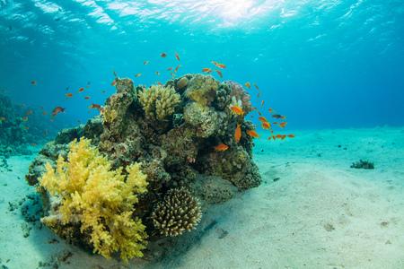 Prachtig koraalrif met zeeleven. Onderwaterlandschapsfoto met vissen en het mariene leven