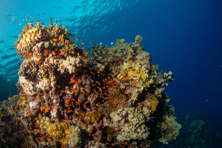Beautiful coral reef with sealife. Underwater landscape photo with fish and marine life 版權商用圖片