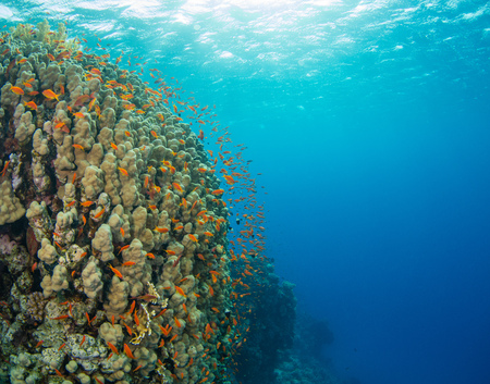 hard coral: Beautiful coral reef with sealife. Underwater landscape photo with fish and marine life Stock Photo