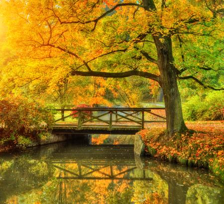 公園の秋の風景。日の出の光で屋外の写真