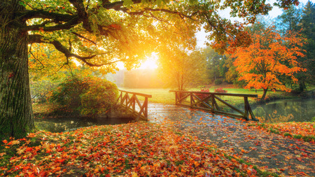 Beautiful autumn scenery in park. Outdoor photography in sunrise light 免版税图像