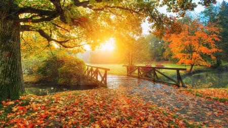 Beautiful autumn scenery in park. Outdoor photography in sunrise light Stockfoto